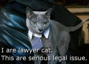 I are Lawyer Cat